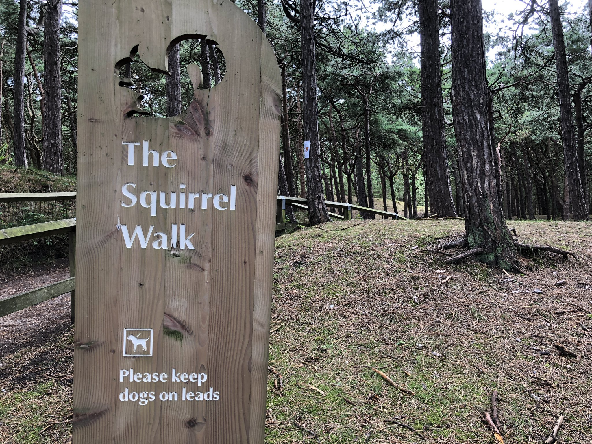 Formby Squirrel Path Sign